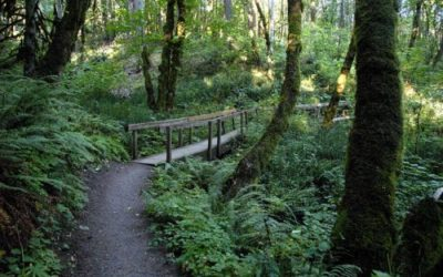 Trails to run or hike in Eugene Oregon